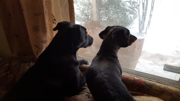 Sam and Olly watch snow.jpg